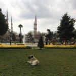 トルコの野良犬は大型犬?!スルタンアフメットをお散歩