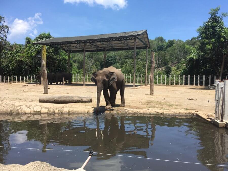 ボルネオ象