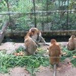 【コタキナバル】ロッカウィ動物園で見られる珍しい動物